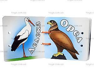 Книжка на шнурке «Мир птиц», , отзывы