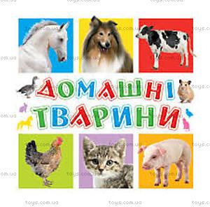 Книга для малышей «Домашние животные», 70634
