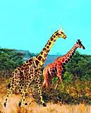 Конструктор деревянный «Жираф» цветной, М020с, игрушки