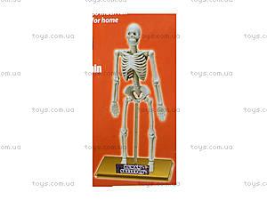 Конструктор «Скелет человека», 28206-EC, купить