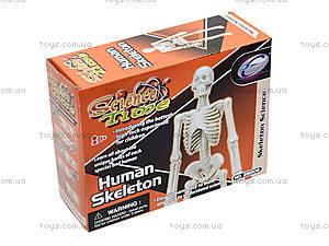 Конструктор «Скелет человека», 28206-EC, фото