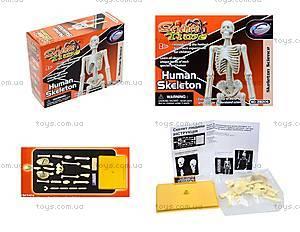 Конструктор «Скелет человека», 28206-EC