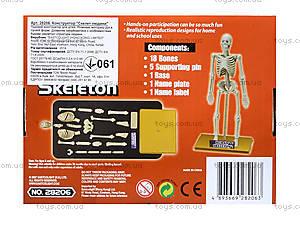 Конструктор «Скелет человека», 28206-EC, цена