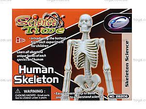 Конструктор «Скелет человека», 28206-EC, детские игрушки