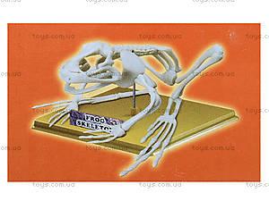 Конструктор «Скелет лягушки», 28201-EC, купить