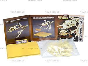 Конструктор «Скелет лягушки», 28201-EC, фото
