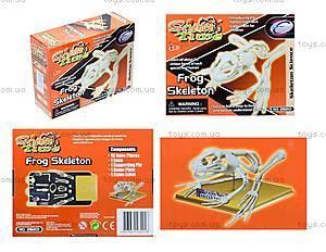 Конструктор «Скелет лягушки», 28201-EC