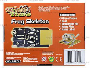 Конструктор «Скелет лягушки», 28201-EC, цена