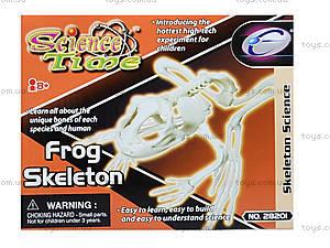Конструктор «Скелет лягушки», 28201-EC, игрушки