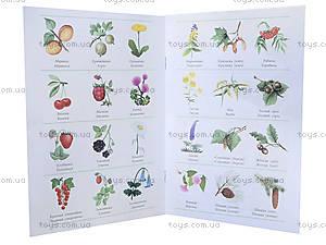 Лото с растениями и плодами «Лунтикова школа», Л524011РУ, магазин игрушек