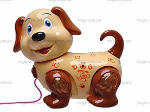 Маленькая собака на поводке, 2013-1, фото