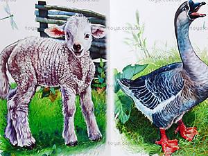 Книжка «Ребятам о зверятах: Во дворе», М322001Р, цена