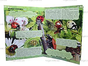 Мини-справка о насекомых «О чём поёт кузнечик?», К181009Р, купить
