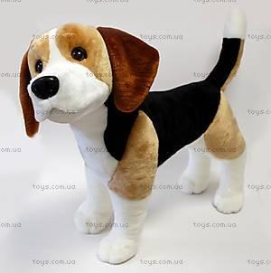 Мягкая игрушечная собака «Бигль Виски», SOB2
