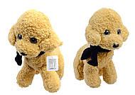 Мягкая Собачка, игрушка, C22836