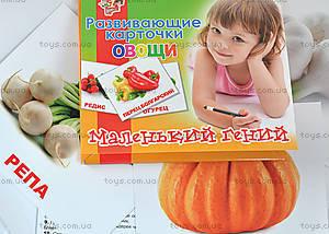 Набор детских карточек «Овощи», 951299