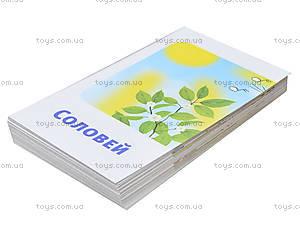 Набор карточек «Читаем предложения», 11106019У, цена