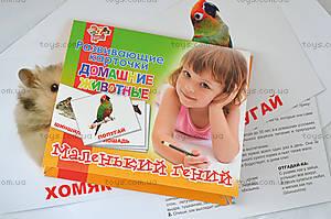 Набор карточек «Домашние животные», 951286