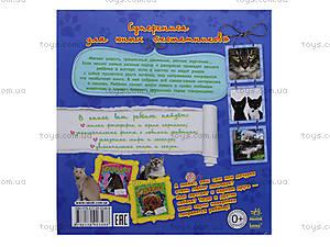 Книга «Самое интересное о кошках», С14274Р, купить