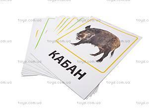 Обучающие карточки «Транспорт и лесные жители», VT1301-04, фото