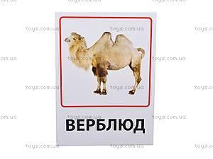 Обучающие карточки «Зоопарк и предметы быта», VT1301-01, купить