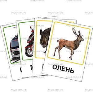 Обучающие карточки «Транспорт и лесные жители», VT1301-04, детские игрушки