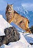 Пазл Castorland на 1000 деталей «Рысь в горах», С-103560, фото