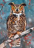 Пазл Castorland на 260 деталей «Большая рогатая сова», В-27347, фото