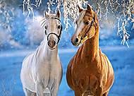 Пазл Castorland на 260 деталей «Зимние лошади», В-27378