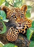 Пазл Castorland на 300 деталей «Ягуар на дереве», В-030170