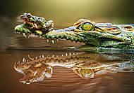 Пазл Castorland на 500 деталей «Крокодил», В-52318