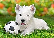 Пазл Castorland на 60 деталей «Белый щенок с мячом», В-06823, купить