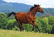 Пазл на 1000 деталей «Бегущая лошадь», С-102396, фото