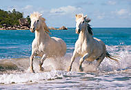 Пазл на 1000 деталей «Камаргские белые лошади», С-102433, купить