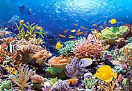 Пазл на 1000 деталей «Коралловый риф», С-101511, отзывы