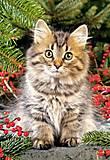 Пазл на 1000 деталей «Котик», С-101740, купить