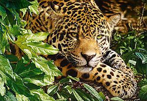 Пазл на 1000 деталей «Леопард», С-102051