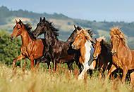 Пазл на 1000 деталей «Лошади», С-101993, фото