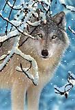 Пазл на 1000 деталей «Волк», С-102068