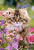 Пазл на 1500 деталей «Котёнок», C-150991, купить