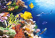 Пазл на 260 деталей «Колларовый риф», B-26630