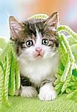 Пазл на 260 деталей «Котёнок под одеялом», B-26678, купить