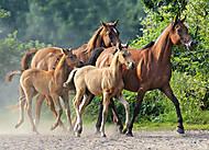 Пазл на 260 деталей «Семейство Лошадей», B-27194, купить