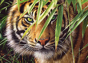 Пазл на 260 деталей «Тигр в джунглях», B-27200