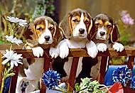 Пазл на 260 деталей «Три щенка», B-26661, фото