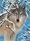 Пазл на 260 деталей «Волк в зимнем лесу», B-27224
