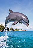 Пазл на 500 деталей «Дельфин», В-51731