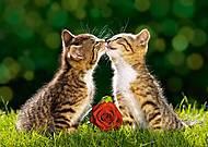 Пазл на 500 деталей «Два полосатых котёнка», В-51625