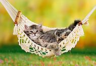 Пазл на 500 деталей «Котёнок в гамаке», В-51434, фото