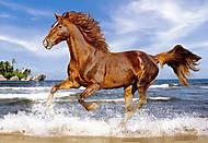 Пазл на 500 деталей «Лошадь на пляже», В-51175